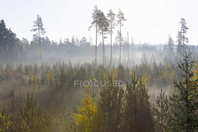 Scenic view of sunlight over forest — стокове фото