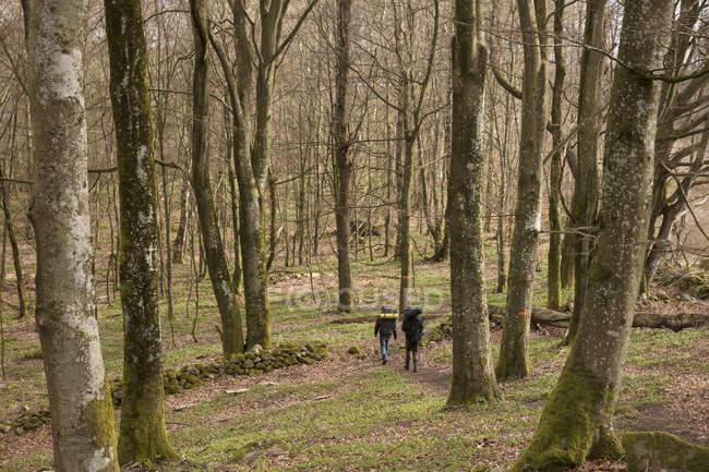 Los hombres senderismo en el bosque, enfoque selectivo — Stock Photo