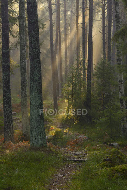 Footpath in forest, selective focus — Stock Photo