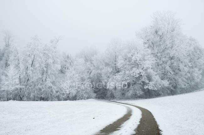 Snow covered road by trees in wintertime — Stock Photo