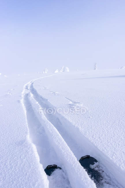 Ski tracks in snow, selective focus — Stock Photo