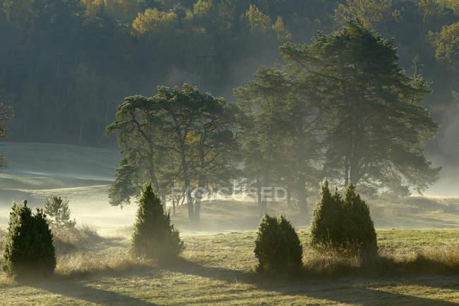 Foresta nella nebbia mattutina, attenzione selettiva — Foto stock