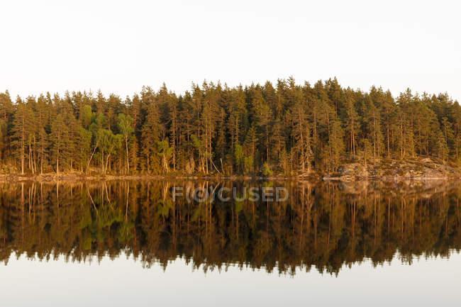 Bosque reflejado en Skiren Lake, Suecia - foto de stock