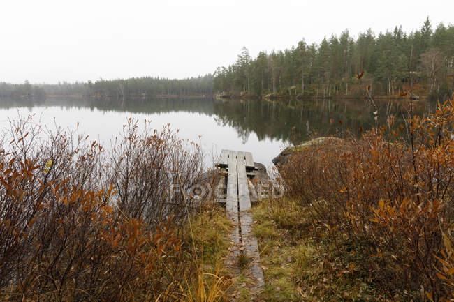 Vista panorámica del muelle entre arbustos por el lago - foto de stock
