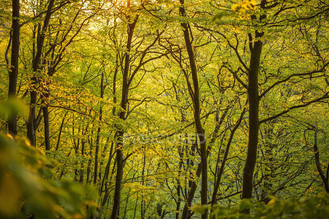 Trees in forest in Soderasen National Park, Sweden — Stock Photo