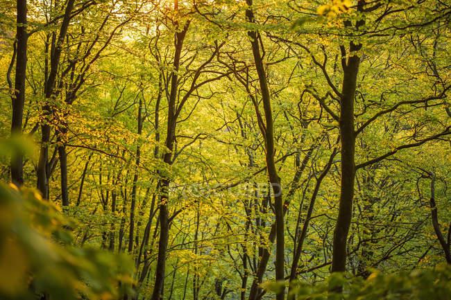 Дерева в лісі в національному парку Содерасен (Швеція). — стокове фото