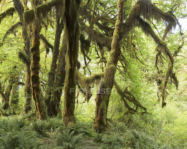 Moss on trees, selective focus — Stock Photo