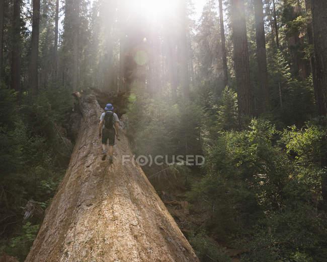 Randonneur marchant sur un arbre tombé — Photo de stock