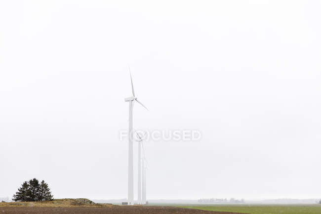 Scenic view of windmills in field — Stock Photo