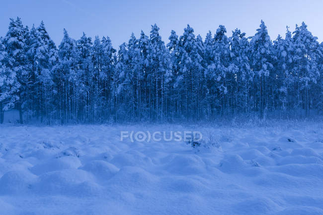 Mounds in snow in Stora Botet Nature Reserve, Sweden — Stock Photo