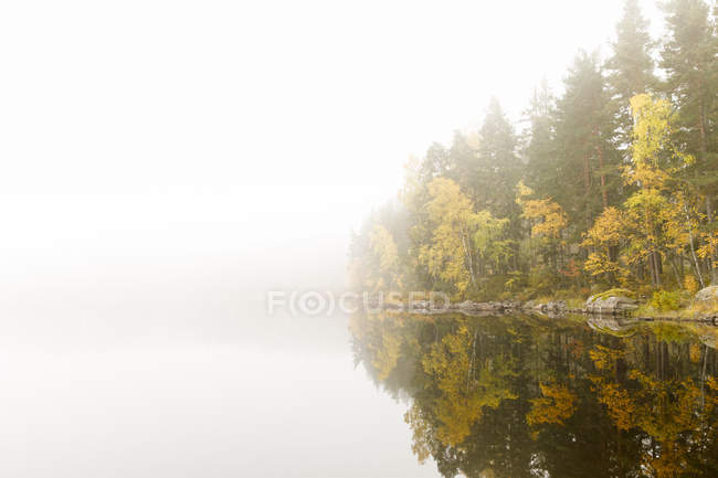 Scenic view of trees beside lake under fog — стокове фото