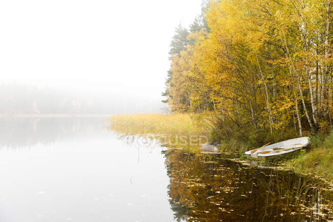 Scenic view of trees and boat beside lake under fog — стокове фото