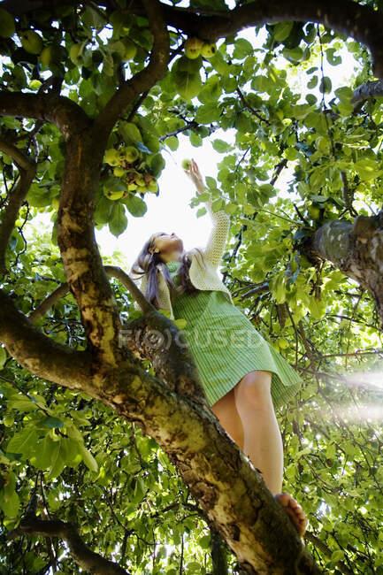 Дівчинка-підліток лазить по дереву. — стокове фото