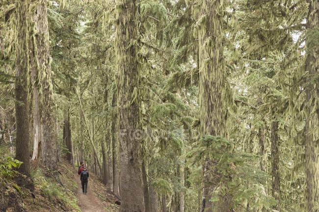 Paseos en el bosque nacional del monte Hood en Oregón - foto de stock