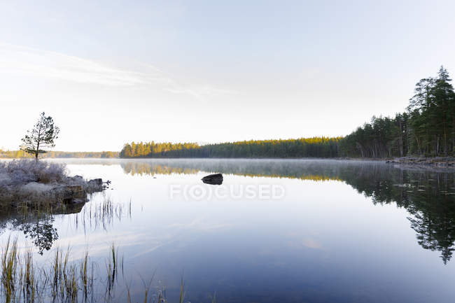 Floresta por lago, foco seletivo — Fotografia de Stock