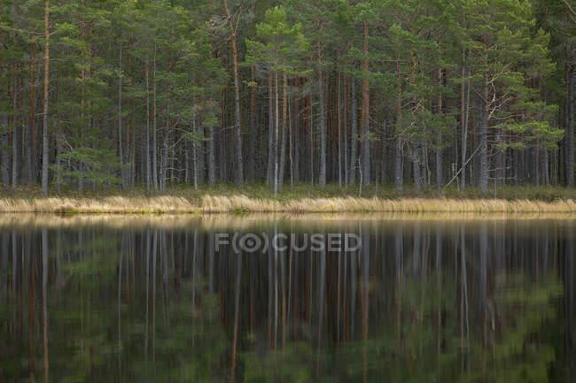 Мальовничий краєвид на ліс біля озера. — стокове фото