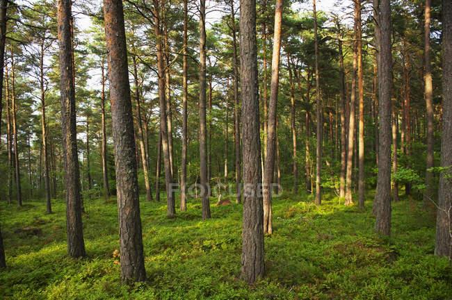 Мальовничий вид зеленого лісу. — стокове фото