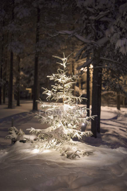 Tree covered in snow, selective focus — Stock Photo