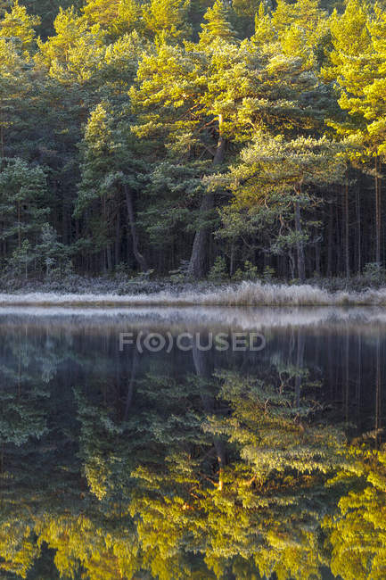 Scenic view of autumnal forest by lake — Stock Photo