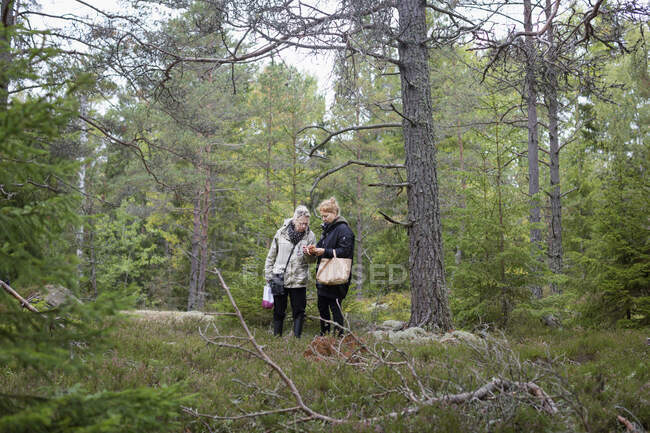 Women picking mushrooms in forest — Stock Photo