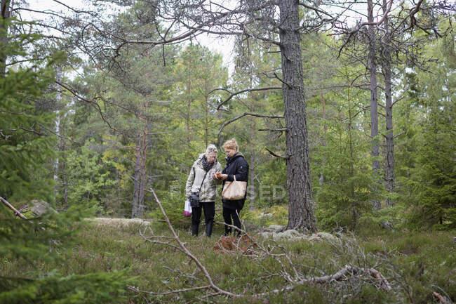 Femmes cueillant des champignons en forêt — Photo de stock