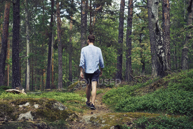 Человек, идущий в лесу, вид сзади — стоковое фото