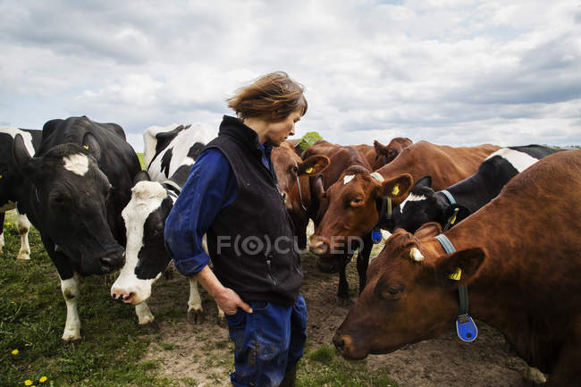 Farmer with cows in field, selective focus — Stock Photo