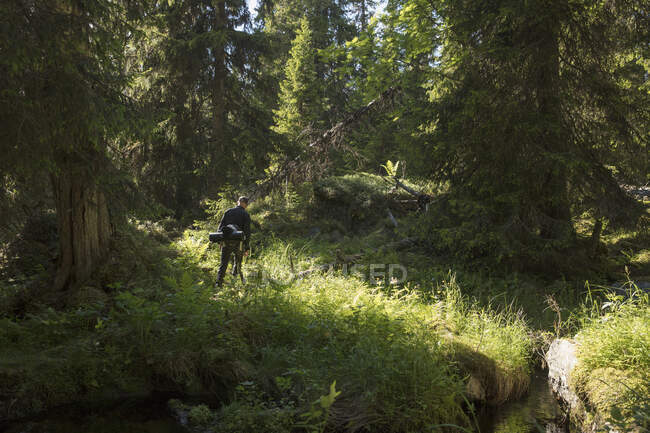 Randonnées pédestres dans la réserve naturelle de Tofsingdalen en Suède — Photo de stock
