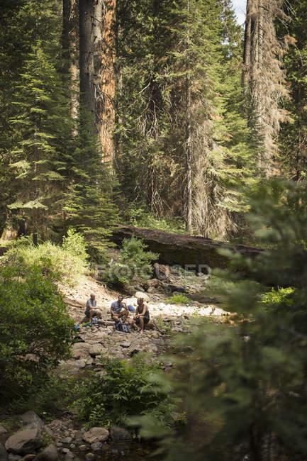 Caminhantes sentados na floresta, foco seletivo — Fotografia de Stock