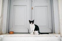Gato perto de porta branca em Paros rua da cidade — Fotografia de Stock