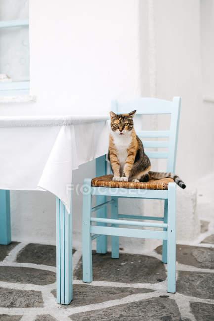 Lindo divertido gato sentado en silla en mesa - foto de stock