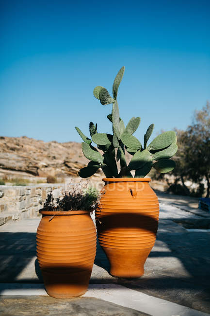 Closeup view of cactus and other plant in pots outdoors — Stock Photo