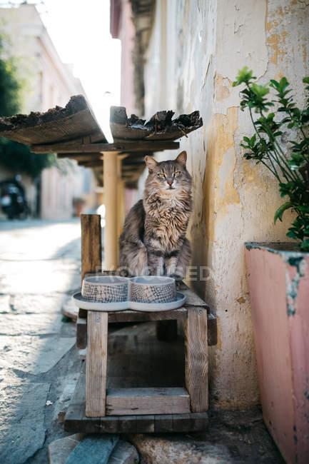 Urban scene of narrow Paros city street and cat — Stock Photo