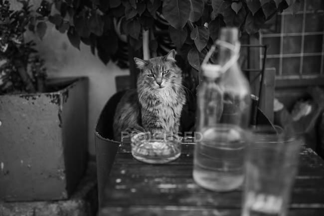 Cat near glass bottle at Paros city street — Stock Photo