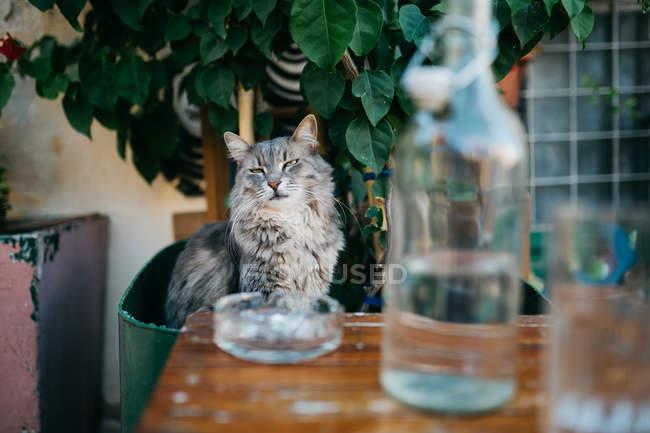 Chat près de bouteille en verre à Paros rue de la ville — Photo de stock