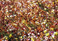 View of blossoming flowers over ground. USA — Stock Photo