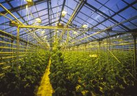 Greenhouse with growing plants at night — Stock Photo