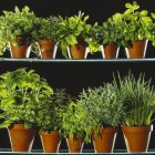 Various green plants and salads in pots on black background — Stock Photo