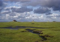 Green grass field, North Frisia, Schleswig-Holstein, Germany — Stock Photo