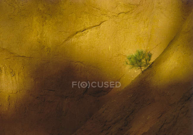 Small pine on sandstone rocks — Stock Photo