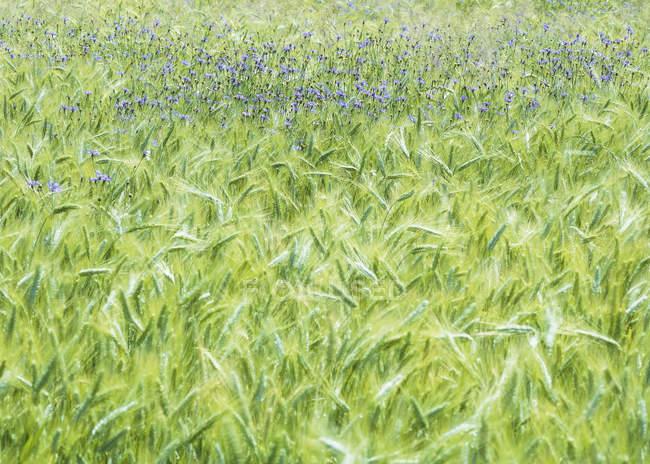 Erba verde e piante sul campo durante il giorno — Foto stock