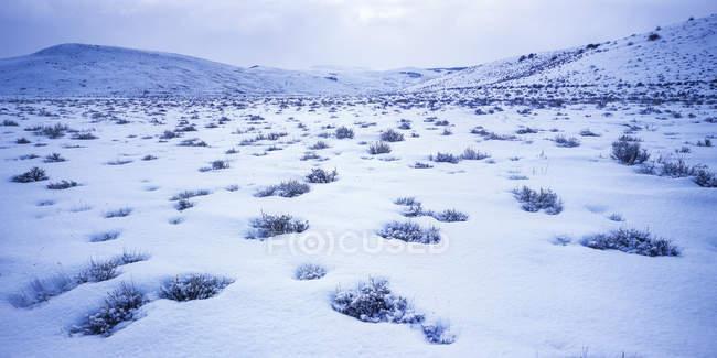 Снежное, широкий ландшафт и холмы на фоне — стоковое фото