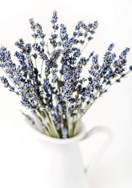 Where To Dried Lavender Flowers Near Me - Flowers Healthy