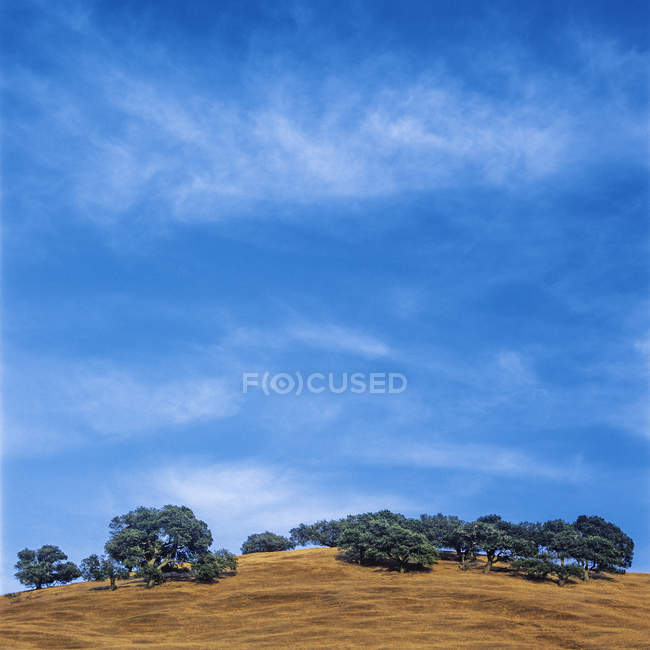 Hill with trees, blue sky during daytime — Stock Photo