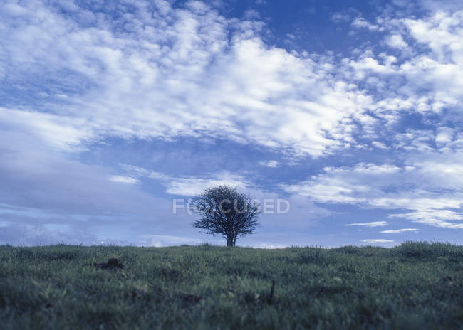 Einzelne, Kahler Baum unter fernen Himmel — Stockfoto