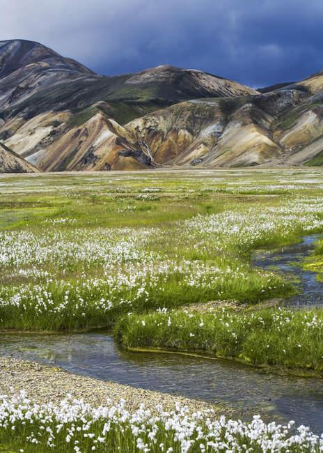 Ruisseau à travers prairies fleuries, montagnes, Landmannalaugar, sud de l'Islande — Photo de stock