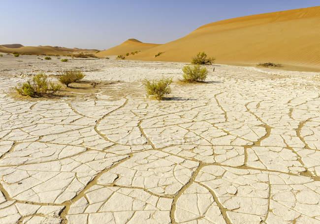 Crosta di sale nel deserto, Rub al-Khali, Oman — Foto stock