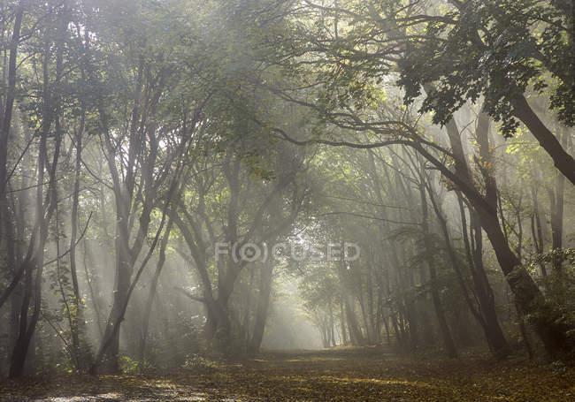 Осінній настрою в листяному лісі — стокове фото