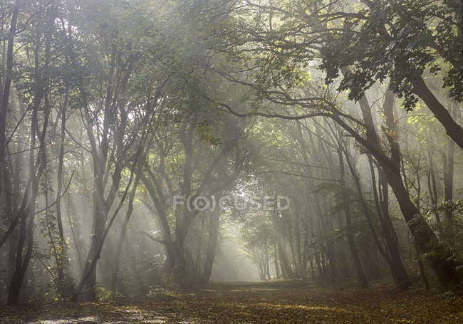 Autumn mood in the deciduous forest — Stock Photo