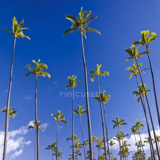 Перегляд дерева пальми проти синього неба денний час — стокове фото